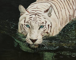Oil painting - White tiger