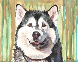 Gouache painting - Husky