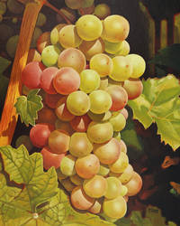Oil painting - Grapes