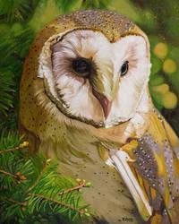 Oil painting - Barn owl