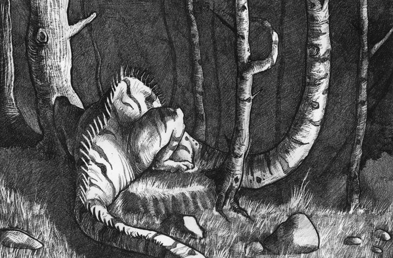 Birchwoods by Rowkey