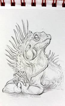 Sketchbook: Haughty Iguana