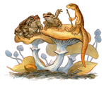 Newt Moot 5: Frog and Toad by Rowkey