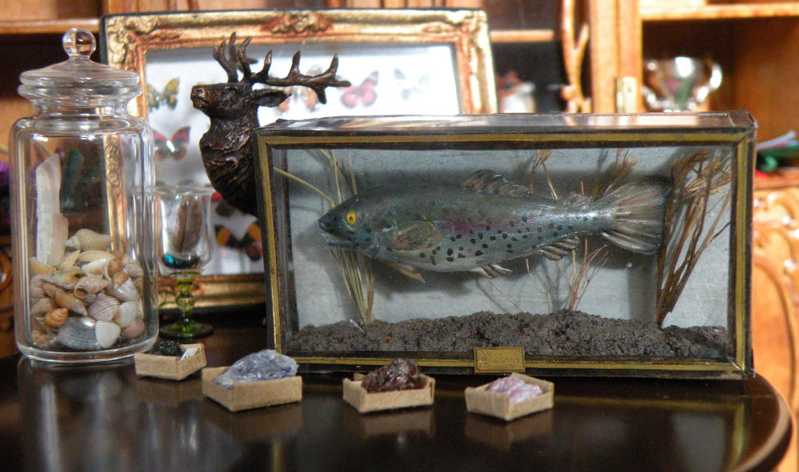 Closeup of the miniature taxidermy fish by oingy-boingy