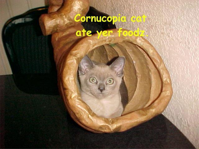 Cornucopia cat by LightningSilver-Mana