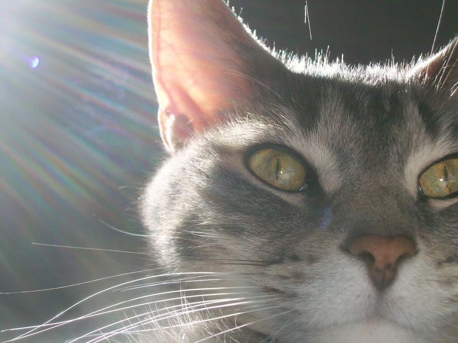 Bonnie-Lizzie's Profile Picture