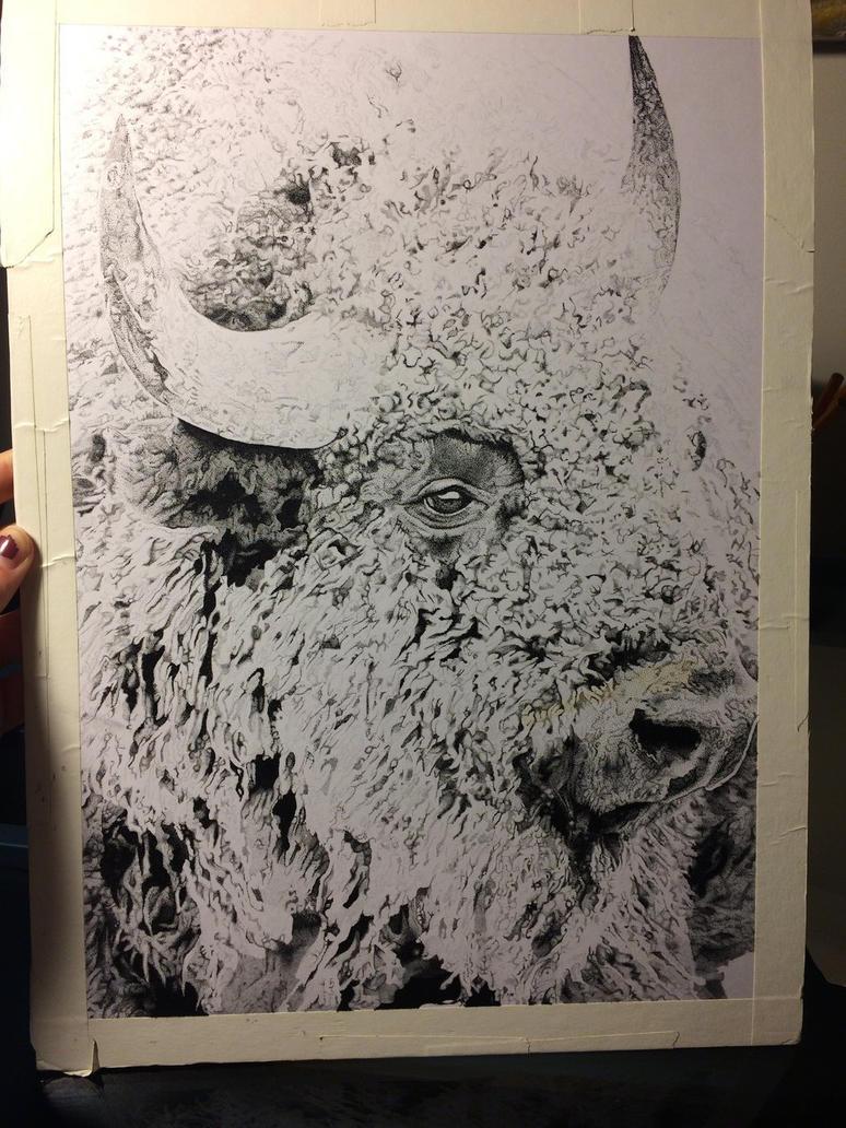 Unfinished Buffalo by kelsmarinoart