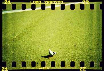 Pigeon Walk by Rabotnik