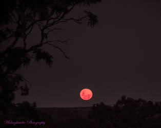 Edited..Full Pink Moon by midnightrider79