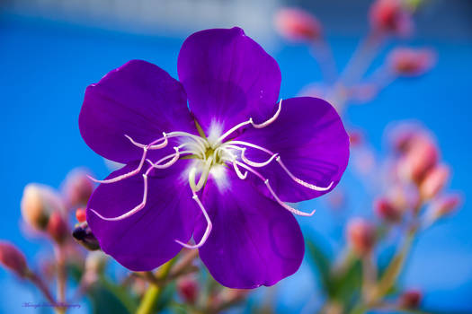 One Purple Day...
