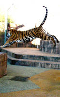 Super Tiger by fennecx