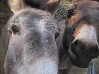 Mules by fennecx