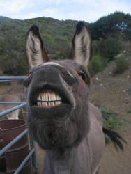 Mule need flossy by fennecx