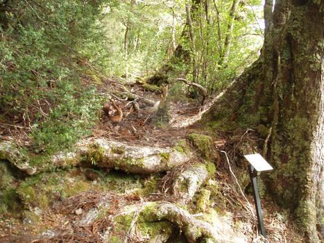 Ancient Rainforest