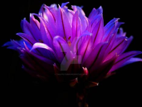 Purple Flower - Bright