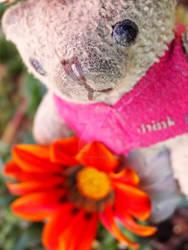 A Flower For Teddy