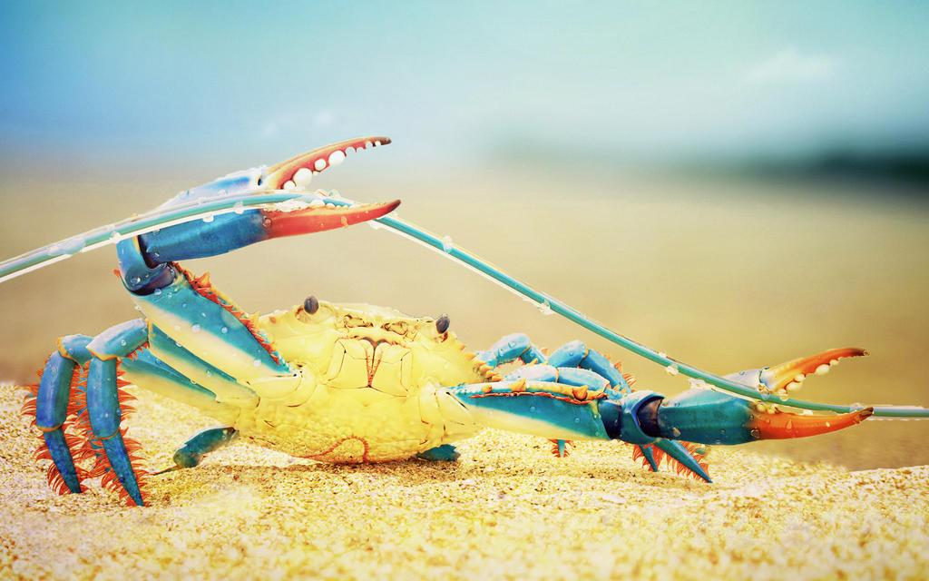 Crab (joke) by ZloyKritik