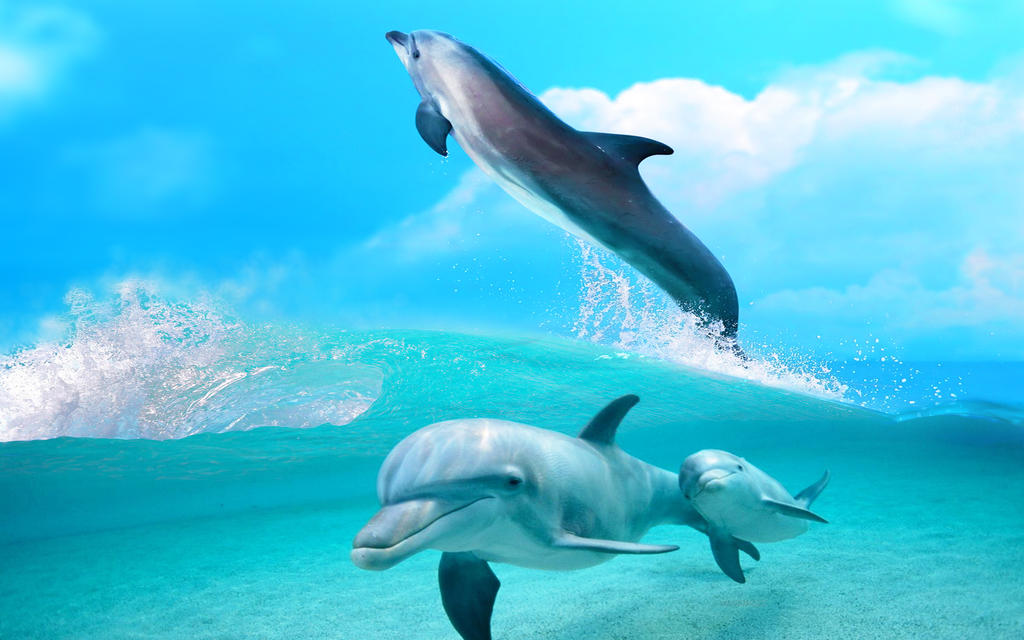 Family of dolphins by ZloyKritik