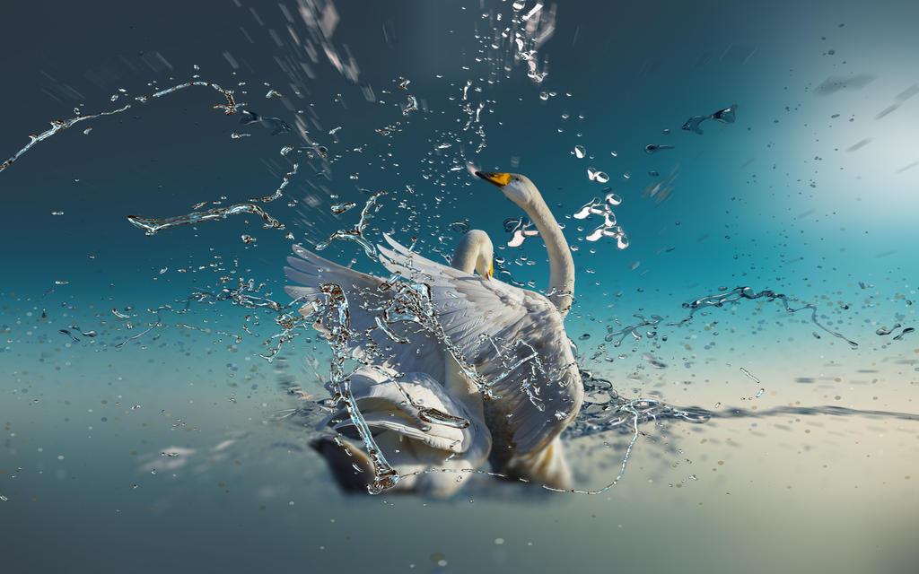 Swans by ZloyKritik