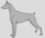 Dog Template - Doberman Pinscher