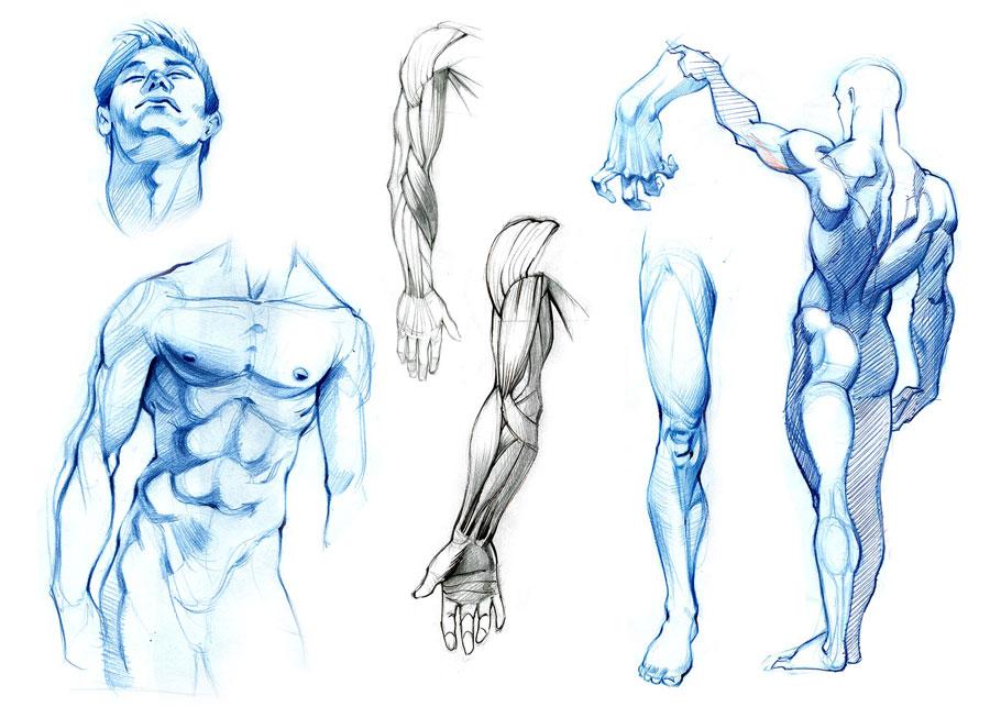 Body Anatomy Study Art