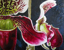 Orchids final by rolfness