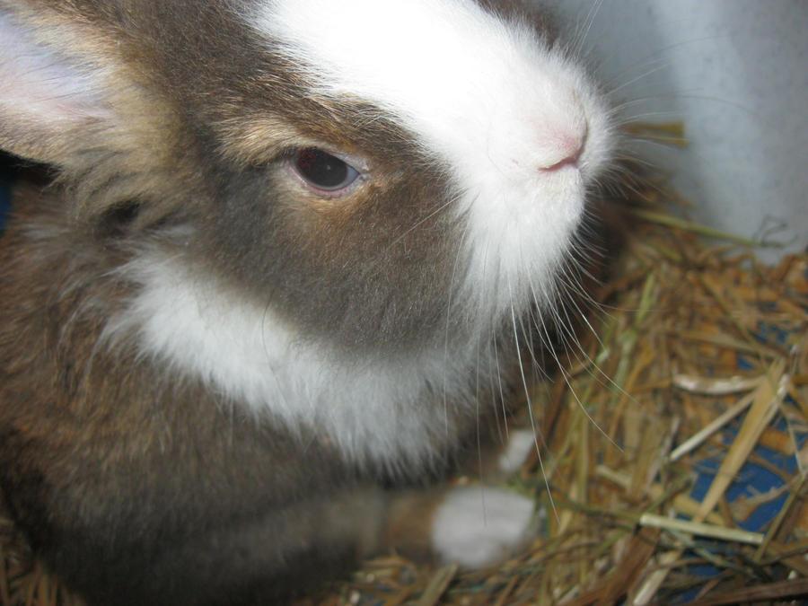 Bunny :) by TrunksJovi