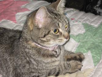 Rosie, My little Sweetpea