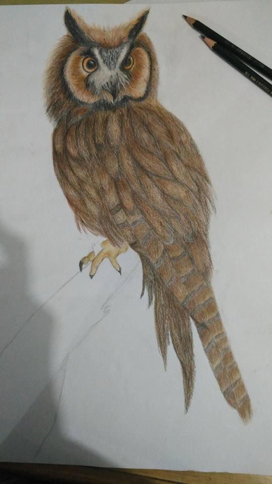 Eastern Screech Owl by Natrizald