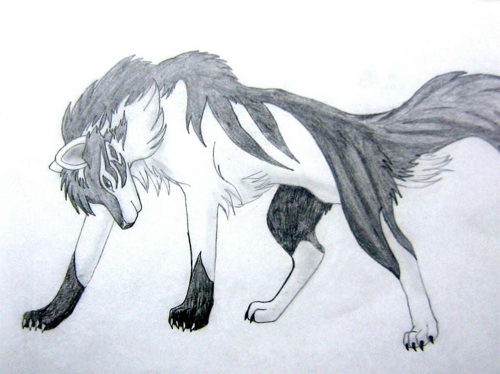 Black And White Wolf By Torikess On DeviantArt