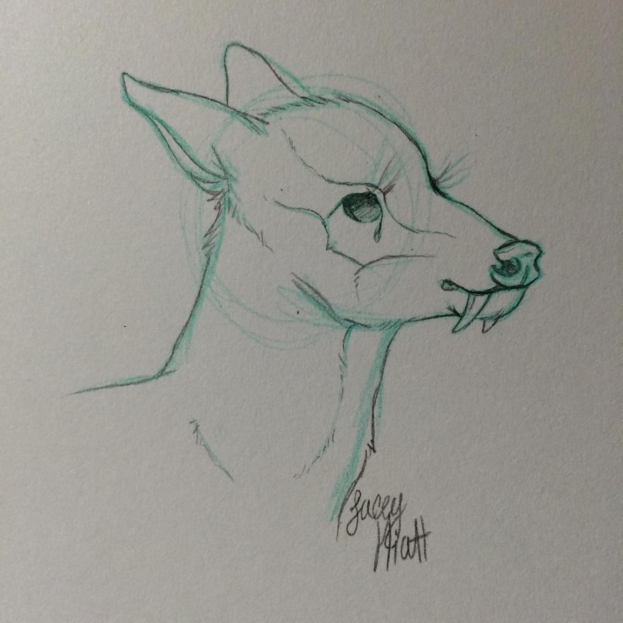 Tufted deer sketch by DenimBirdie