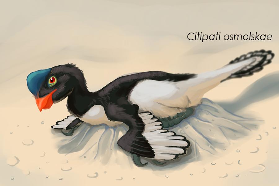 Velociraptor Osmolskae