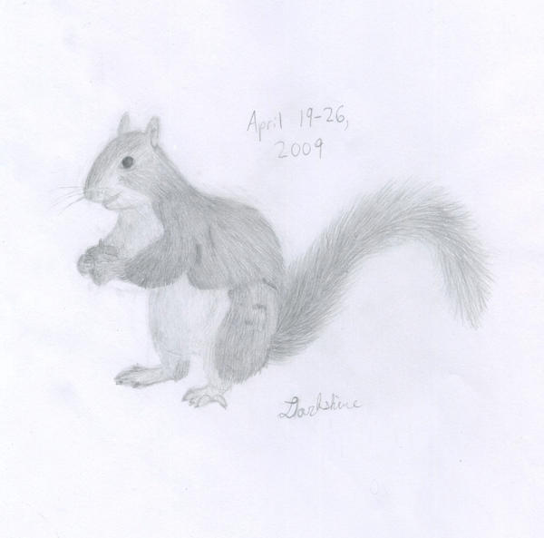 Gray Squirrel pencil drawing by Darkshine-Dragon