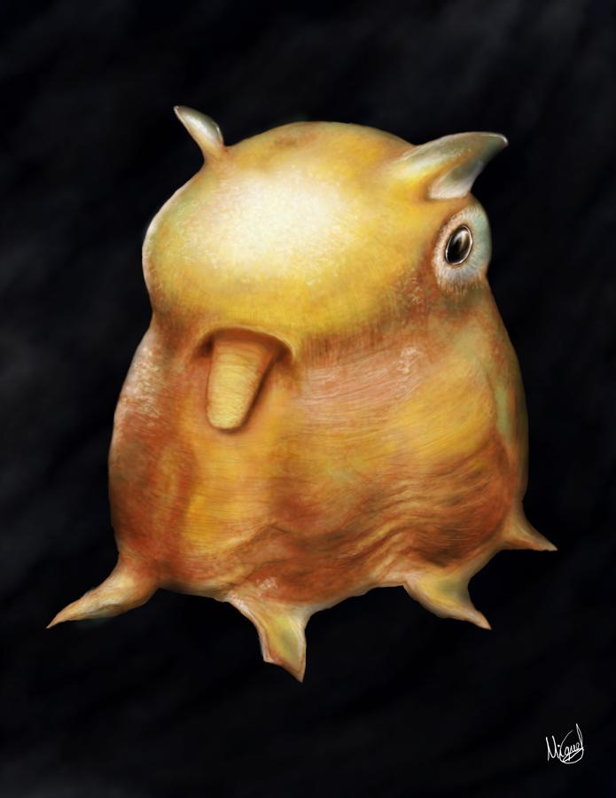 Cute dumbo octopus - photo#47