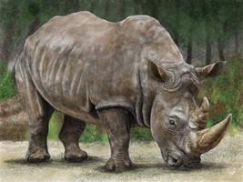 White Rhinoceros by Berilia