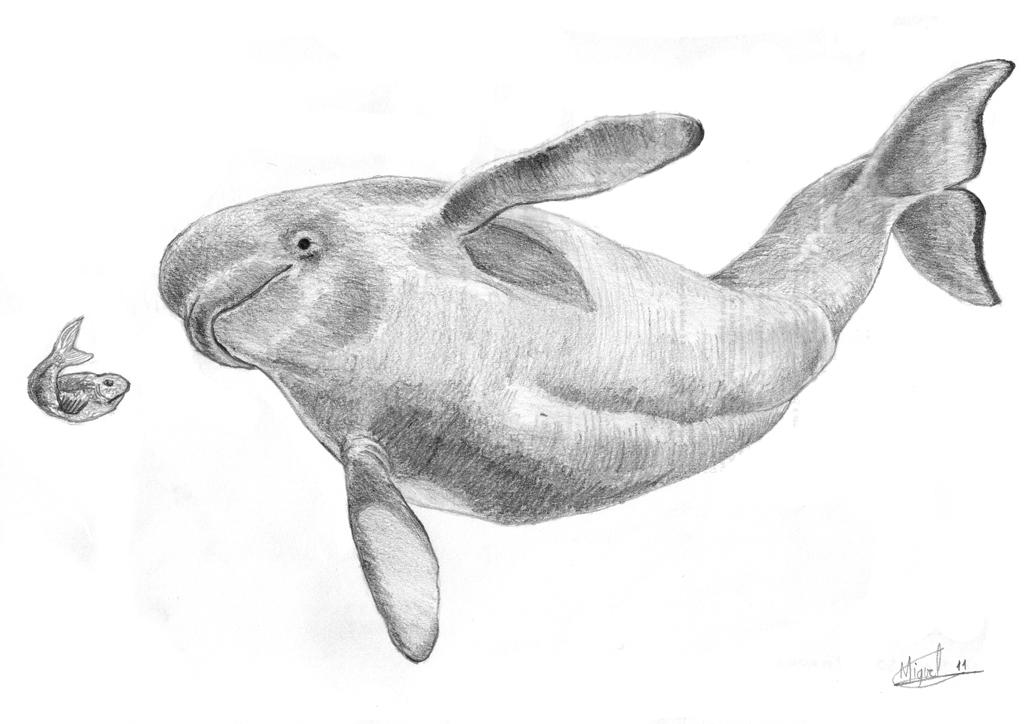 beluga whale by berilia