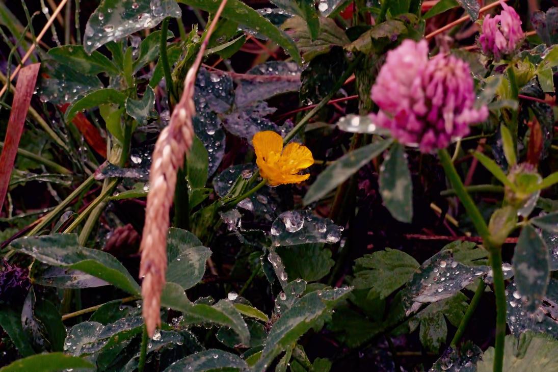 RainDrop by Fubar-1