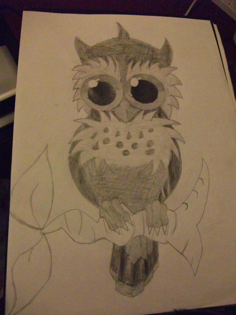 how to find an owl for witchery