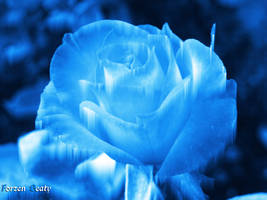 Frozen Beauty by whitysb