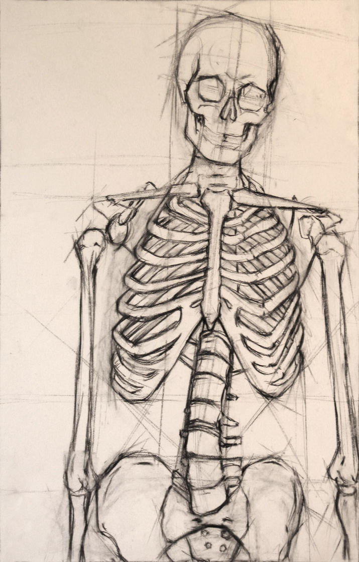Skeleton For Anatomy Class 393846 Follow4morefo