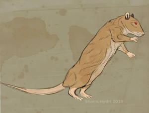 Ditch the Rat