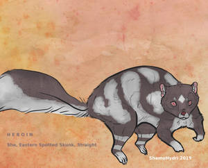 Spotted Skunk OC