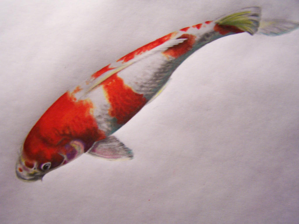 Koi fish by twyliteskyz on deviantart for Koi fish net