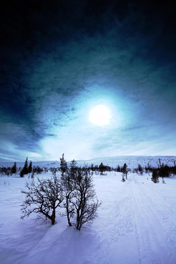 White Birch by Fnuffleh