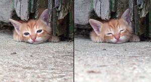 Kitties 42...