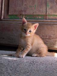 Kitties 43... by letisto
