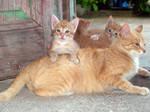 mum and the kitties..2