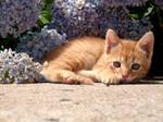 Kitties 77...