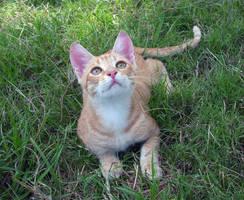Cat portrait by letisto