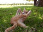 Funny Cat II